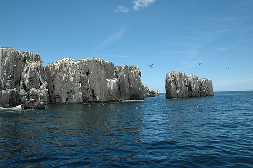 The Farne Island Pinnacles